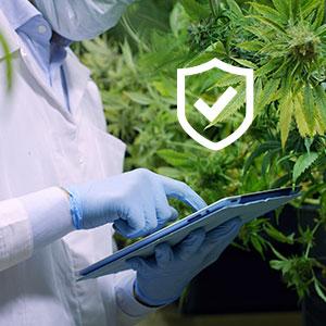 Cannabis-security